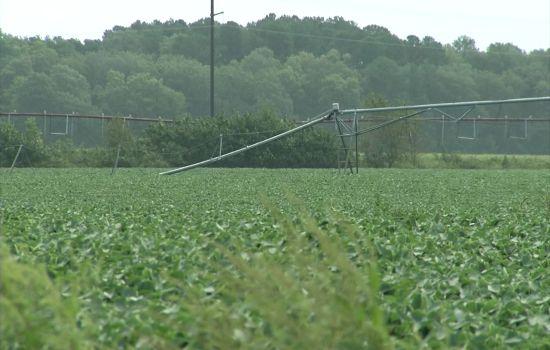 Irrigation Damage